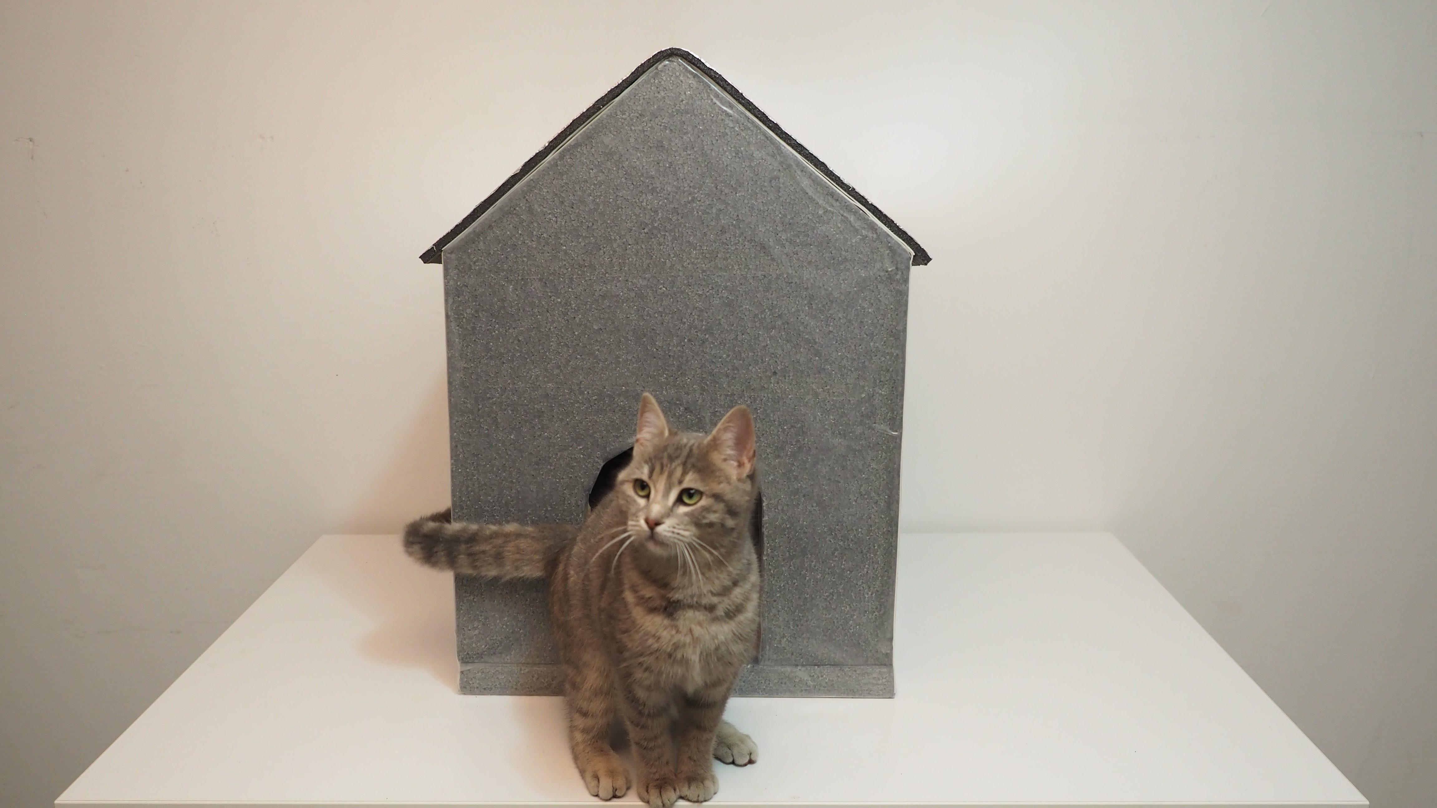 Kedi ve köpek kulübesi nasıl yapılır?