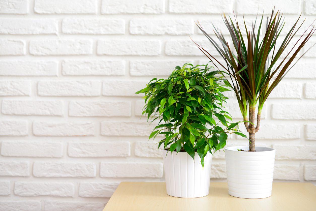 Evdeki malzemelerle bitki bakımı.