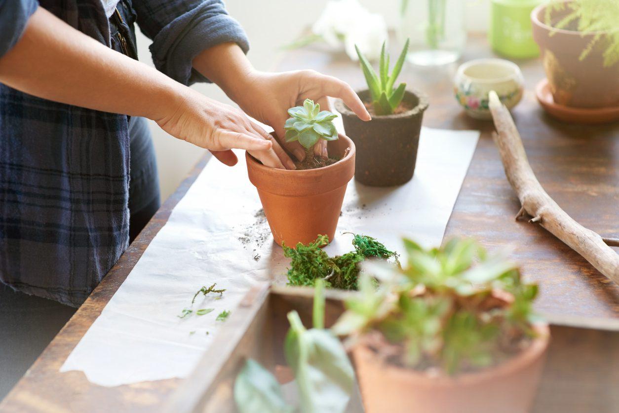 Ev bitkileri için bakım önerileri.