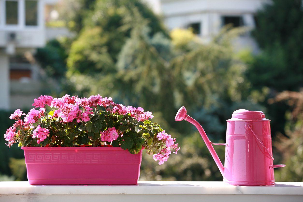 Evinizde bitki bakımı tüyoları.
