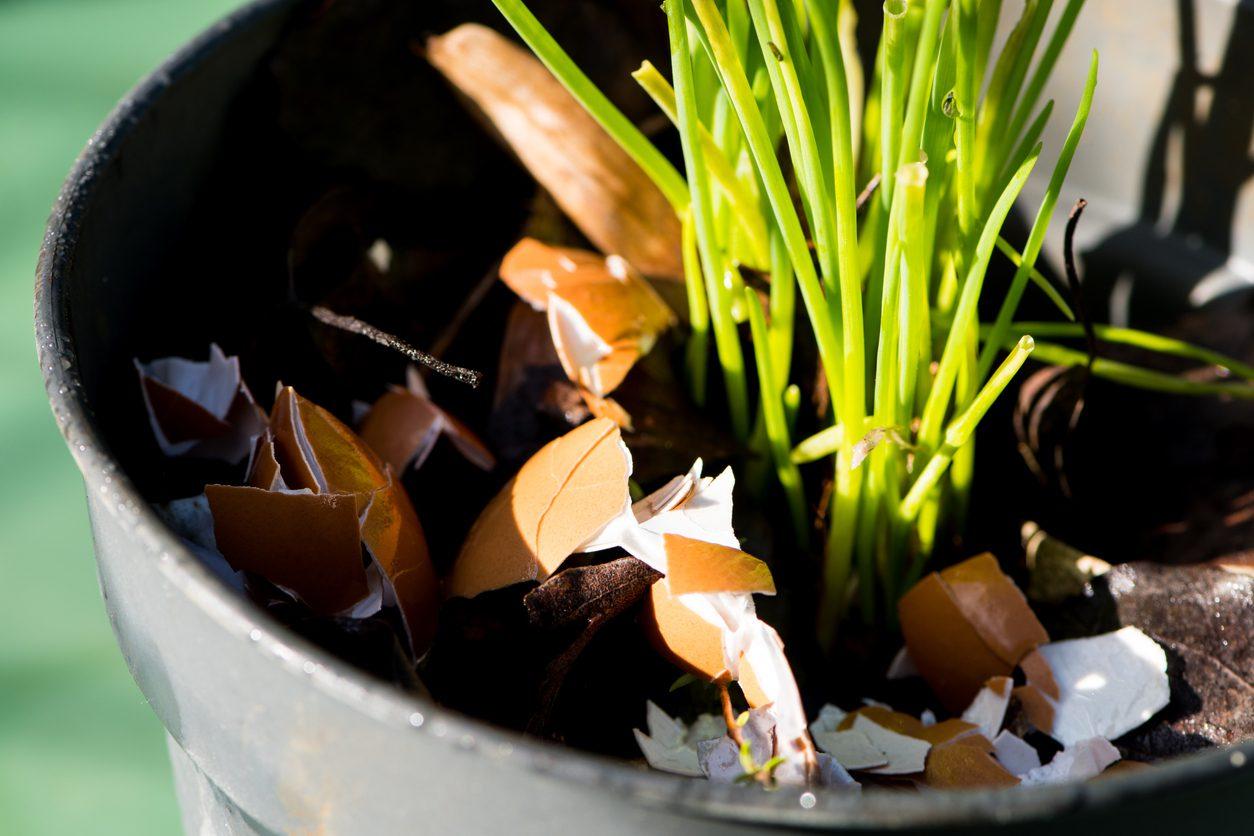 Yumurta kabuğunun bitkilere iyi gelmesi.