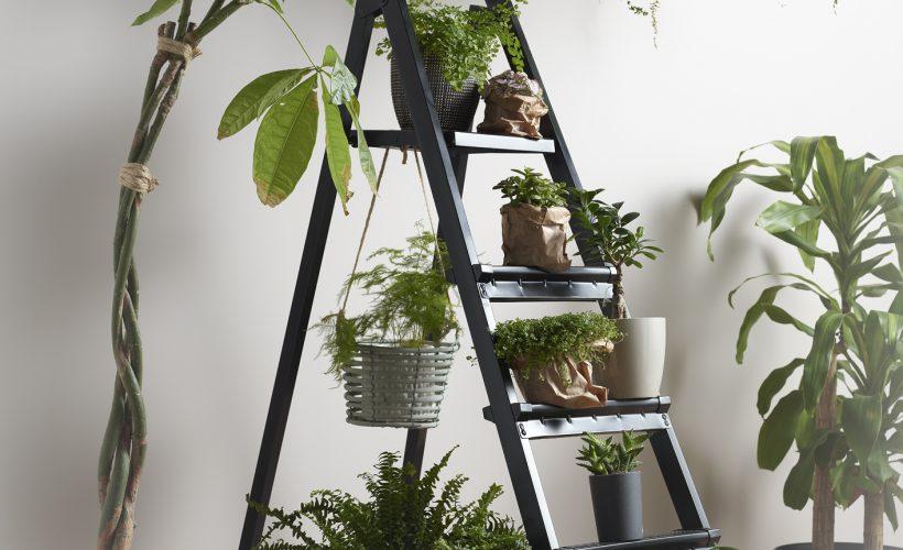 Böcekleri evinizden uzak tutmanıza yardımcı olan bitki çeşitleri.