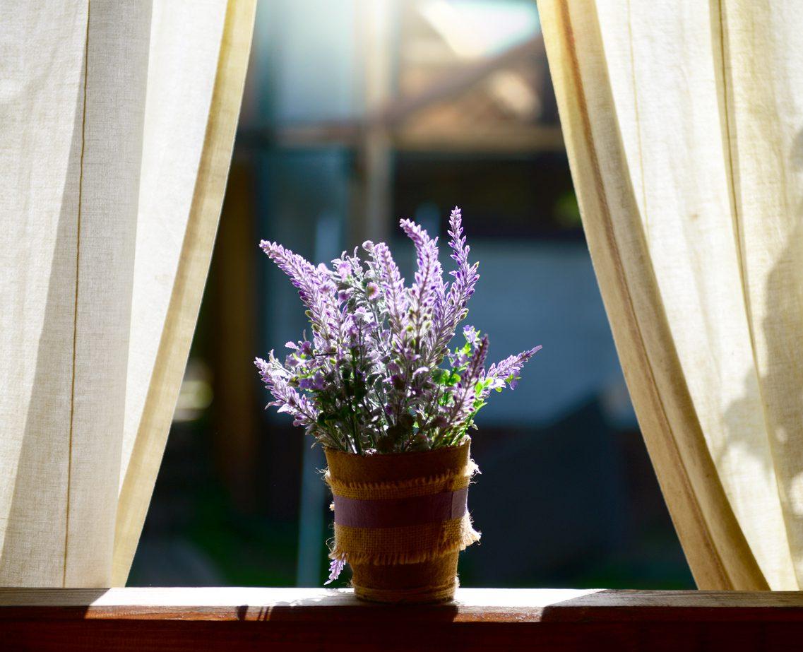Lavanta bitkisinin kıyafet saklamak için kullanılması.