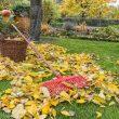 Sonbaharda bahçe bakımı.