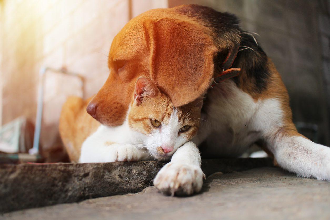 Sokak hayvanları için neler yapabilirsiniz?