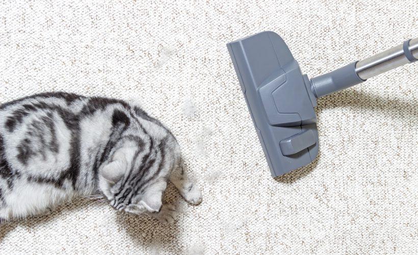 Kedi tüylerini süpürmek