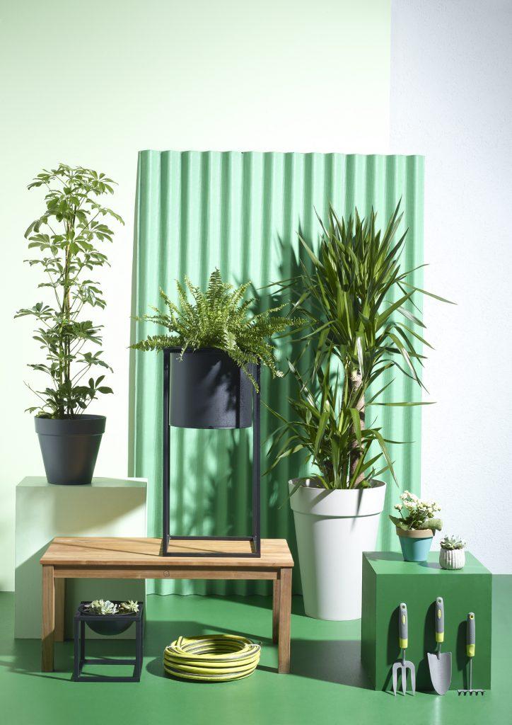 Bitki bakımı püf noktaları