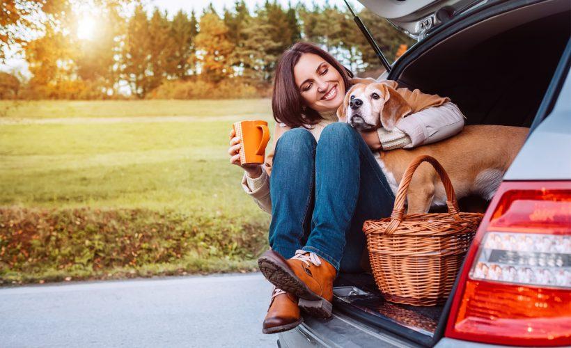 Evcil hayvanla araba yolculuğu