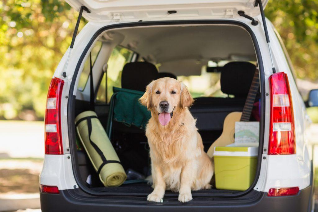 Evcil hayvanla nasıl seyahat edilir?