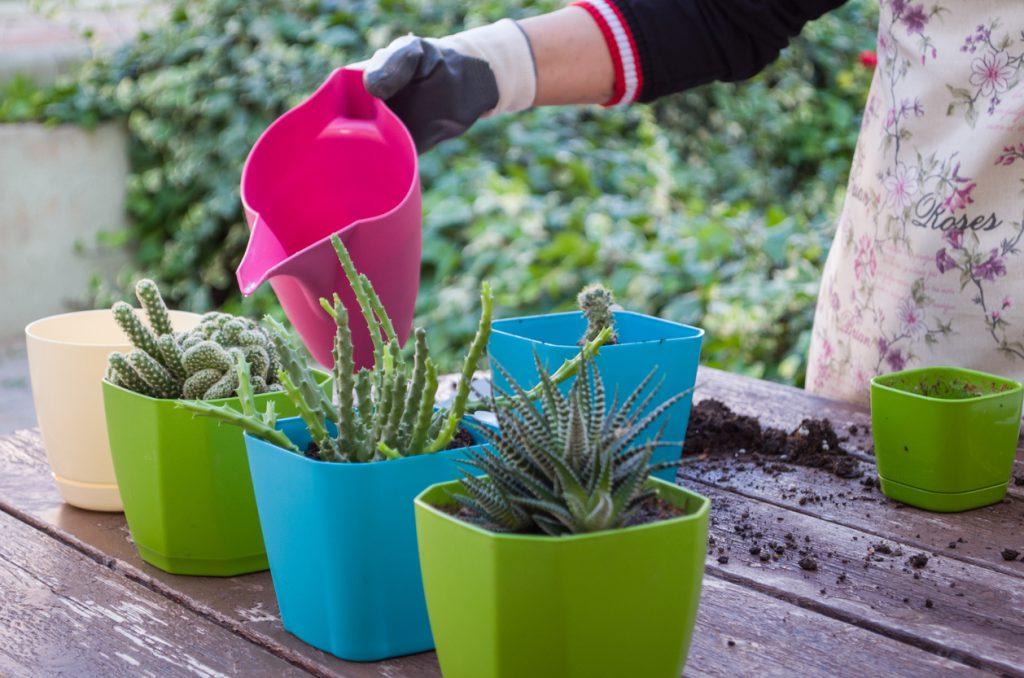Evde bakımı kolay bitkiler