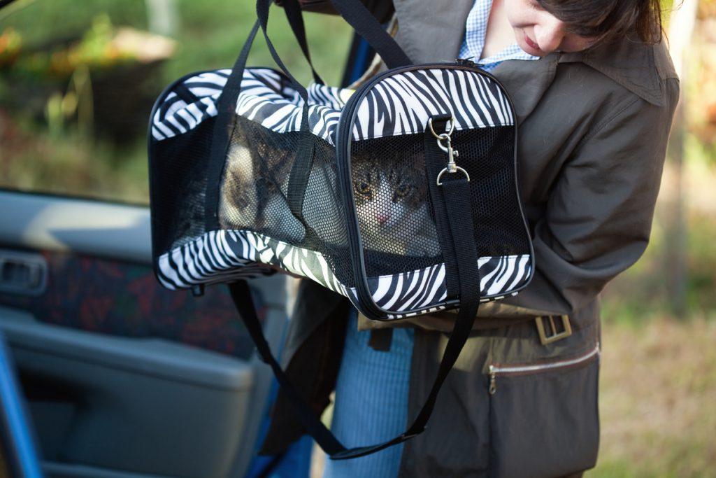 Kedi ile araba yolculuğu