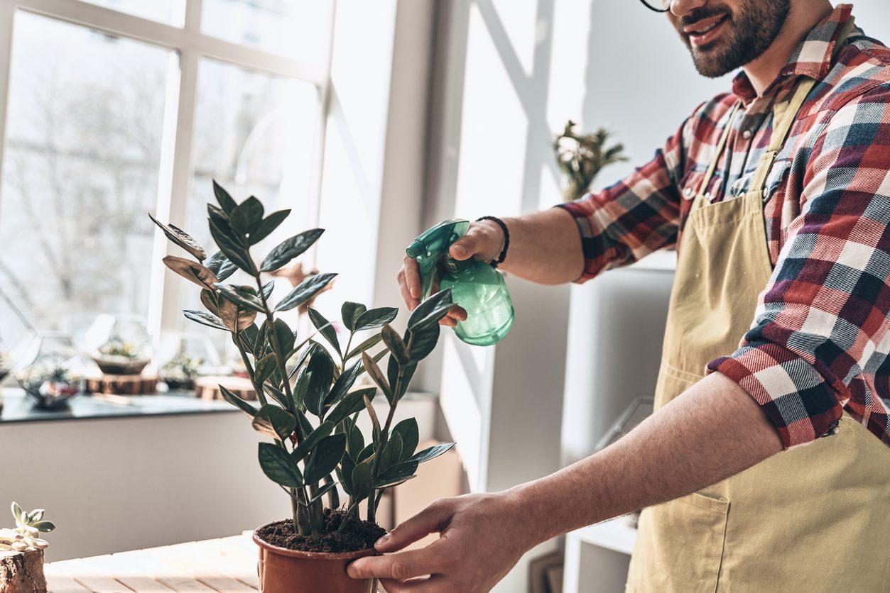 Tatile gitmeden önce bitkileri ihmal etmeyin