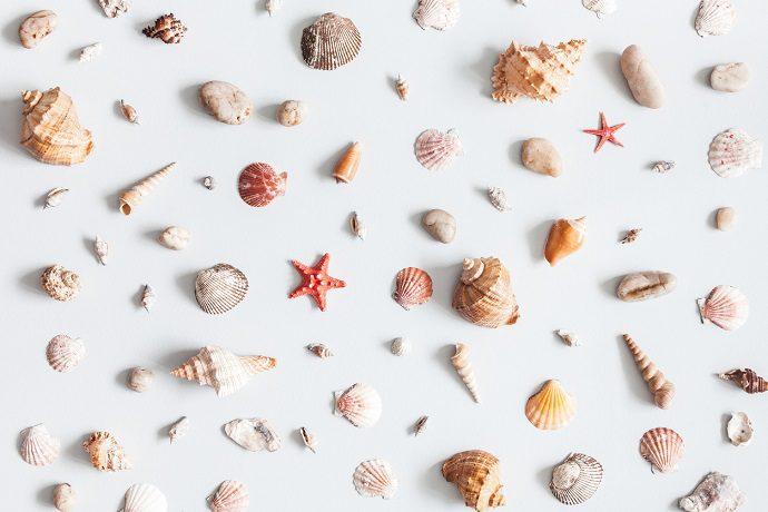 Yaz Duvar Dekorasyonu Deniz Kabuklarıyla Duvar Süsü