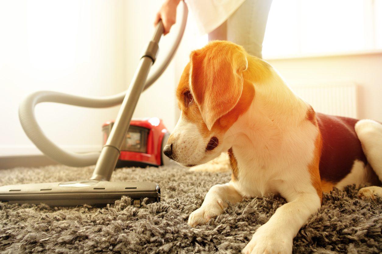Evcil Hayvan Sahipleri İçin Elektrikli Süpürge