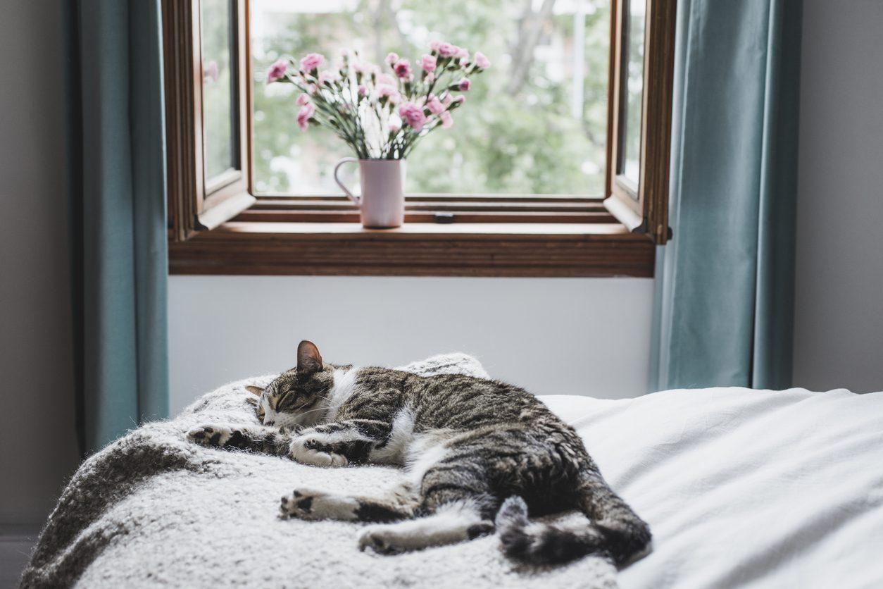 Kediler İçin Dekorasyon
