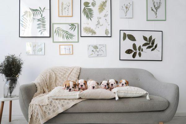 Evcil Hayvanlı Evler