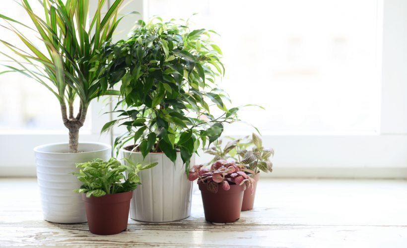 Bitki Saksısı Nasıl Olmalı