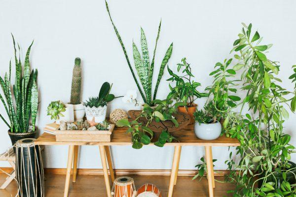 Salon Bitkileri Bakımı