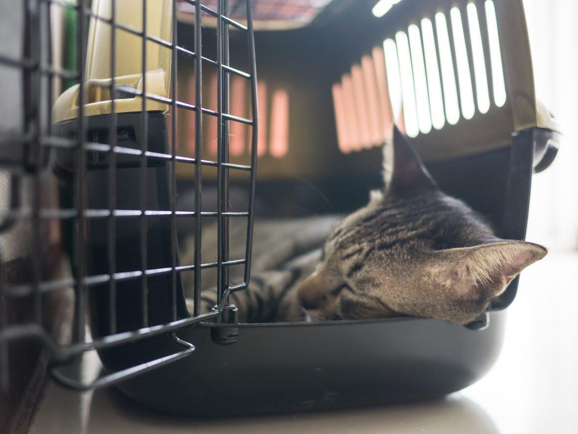 Kedi Yeni Eve Nasıl Alıştırılır
