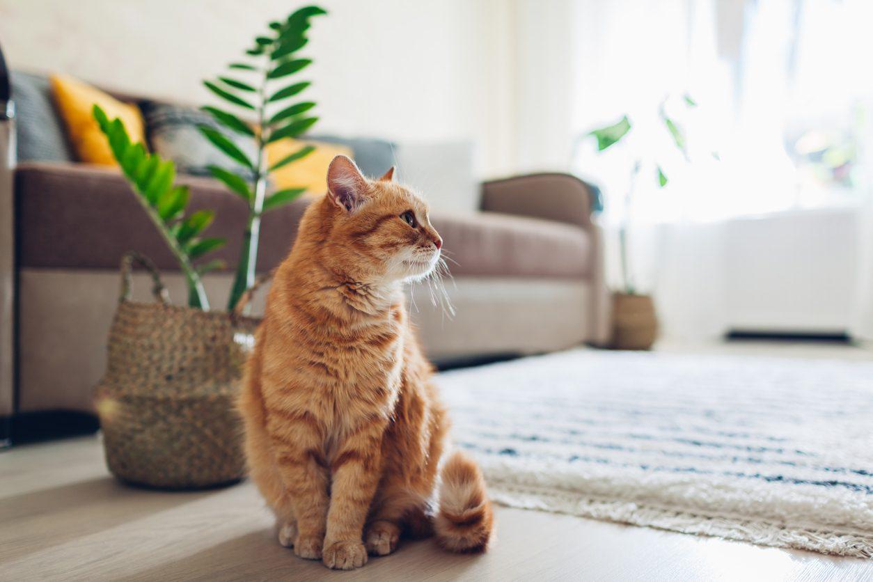 Kedilerin Ev Değiştirmesi