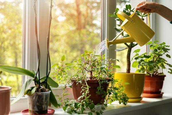 Bitkiler Hakkında Sık Sorulan Sorular