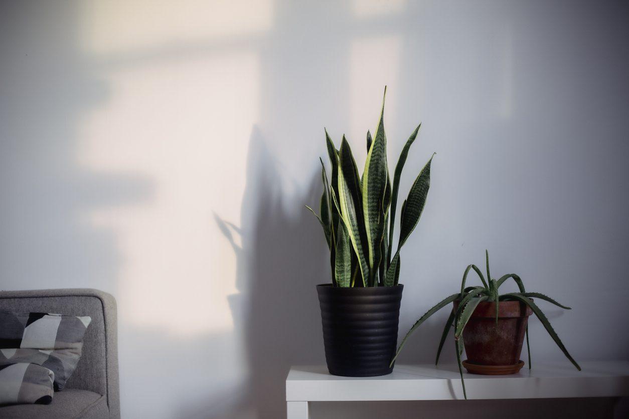 Bakılması Kolay Bitkiler