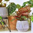 Bakımı Kolay Bitkiler