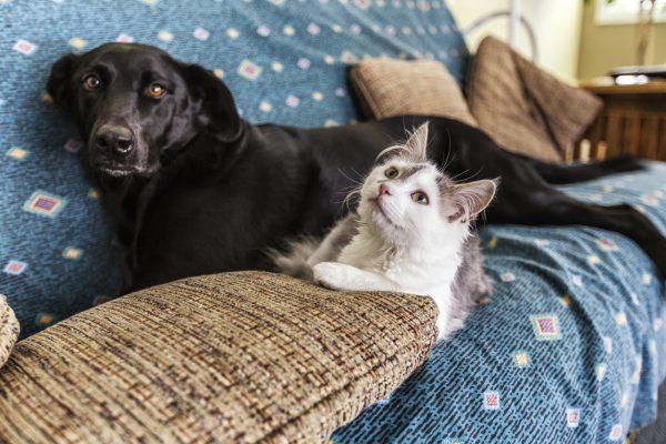 Evcil Hayvan İçin Evi Güvenli Hale Getirmenin Yolları