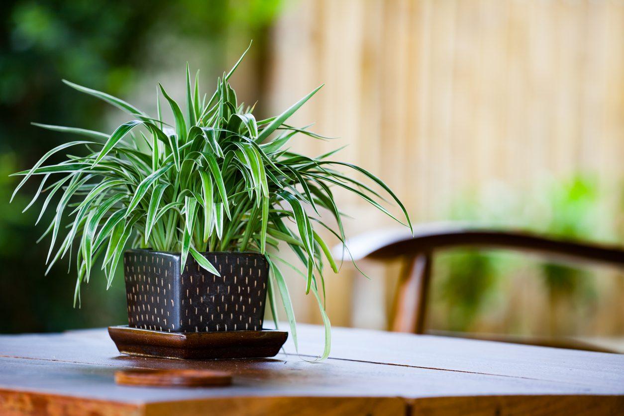 Evde Bakılması Kolay Bitkiler