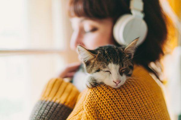 Kedi İhtiyaç Listesi
