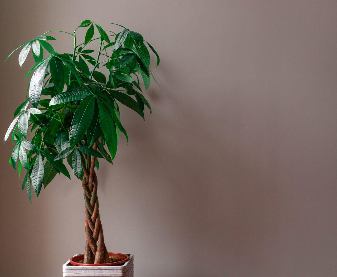 Kolay Bakımı Olan Bitkiler