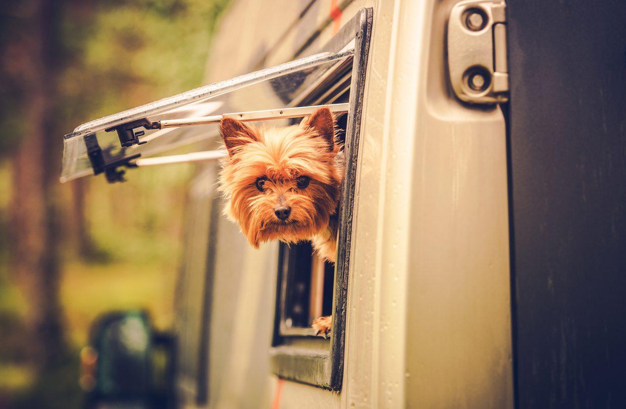 Köpekle Kampa Giderken Gerekli Malzemeler