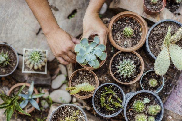 Bitki Toprağı Çeşitleri ve Özellikleri